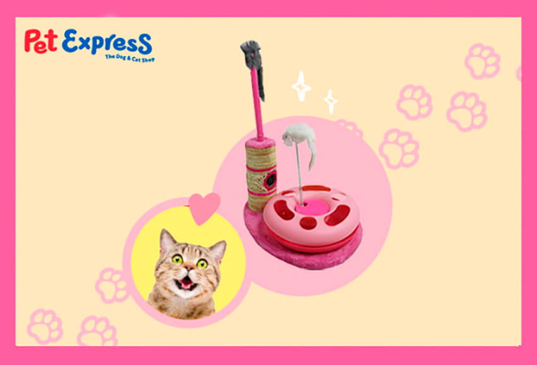 SM_Pet_story_inserts_Pet_expresss_WD9vO5gs